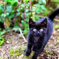Котёнок бежит :: Марина Романова