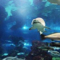 акула :: kuta75 оля оля