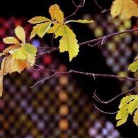 Осень :: Екатерина Торганская