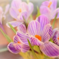 Весенний первоцвет :: Татьяна Зема