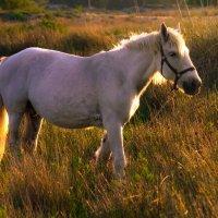 Конь-огонь :: Павел Чатыев
