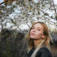 Цветущая весна :: Анастасия Шилько