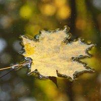 Осенний листок , он так одинок :: Игорь