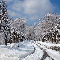 Первый снег ... :: 7zan0z