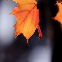 Осенняя слеза.... :: Валерия  Полещикова