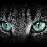 смотри мне в глаза! :: Лара Leila