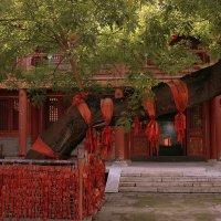 Даосский храм :: Лара Лаби