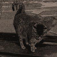 мультик про кота :: Юлия Денискина