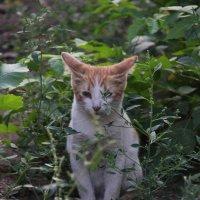 Кот в траве :: Elena Kashmareva