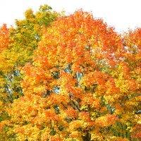 Осень :: Ванда Азарова