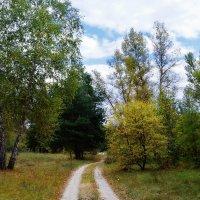 Осенний лес - прекрасен и печален... :: *MIRA* **
