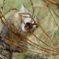 Кушать!!! :: Оксана Лада