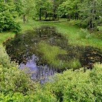 Лесное озеро :: Владимир Брагилевский
