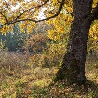 Вот и осень... :: Андрей Зайцев