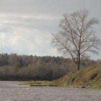 тополь и река :: Михаил Жуковский
