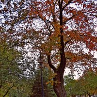 Осенний парк(1) :: Vladimir Semenchukov