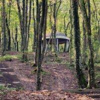 В осеннем лесу. :: Vladimir Lisunov