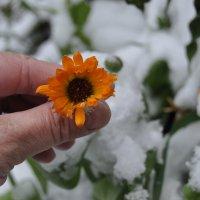 Зима однако, 3 октября в саду. :: Tatyana Kuchina