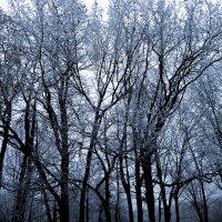 Snowy trees :: Milena WeirdDark