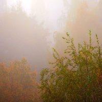 Питерский туман :: Дмитрий Редьков