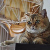Золотой мой котик :: Светлана Безлепкина