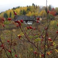 Ошипованная деревня :: Валерий Чепкасов