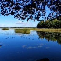 Синева сентября  (Финский залив) :: Светлана