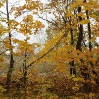 Осень :: Вик Токарев