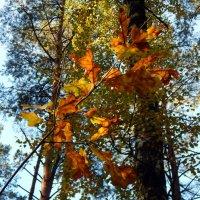 В осеннем лесу... :: Владимир Самойлов