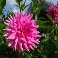 Величавые цветы  Гордо смотрят с высоты... :: Galina Dzubina