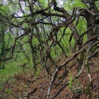 пьяный лес :: Ник Карелин
