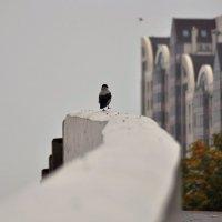 Туманная осень :: Albina