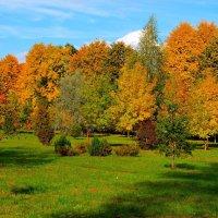 Осенний пейзаж. :: Алексей Жуков