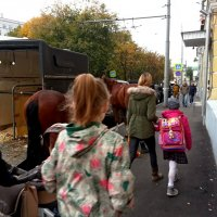 По улице коней водили... :: Владимир Безбородов
