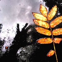 Недотрога-осень :: Валерий Розенталь