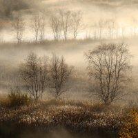 В тумане :: Елена Перевозникова