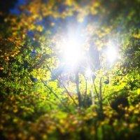 Осень, осень :: Валентина Ломакина