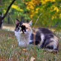 Кошка по имени Осень... :: *MIRA* **