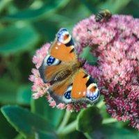 Бабочка :: Ирина Демидова