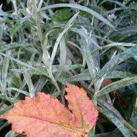 Осенние краски... :: Galina194701