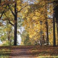 Золотая осень :: Алёнка Шапран