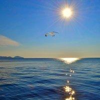 Утренняяя чайка :: Виктор Шандыбин