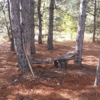 скамеечка в лесу :: Галина
