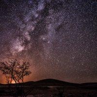 Ночь в пустыне :: susanna vasershtein