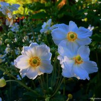 Парк цветов осенью (серия) Танго для троих :: Nina Yudicheva
