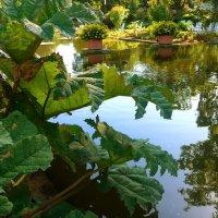 Парк цветов осенью (серия) У водной глади :: Nina Yudicheva