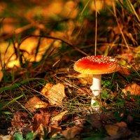 В осеннем лесу. :: Igor Yakovlev