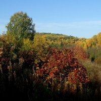 Наша осень :: Валерий Чепкасов