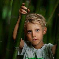 в бамбуковой роще :: Устинья Онищук