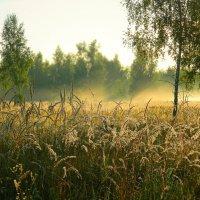 И всходит солнце над поляной... :: ольга хадыкина